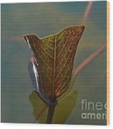 Lotus Leaf Wood Print