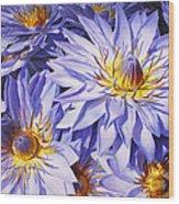 Lotus Light - Hawaiian Tropical Floral Wood Print