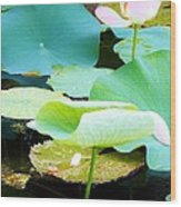 Lotus Lilly Pond Wood Print