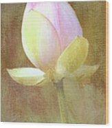 Lotus Looking To Bloom Wood Print