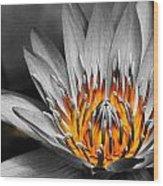 Lotus On Fire Wood Print