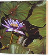 Lotus One Wood Print