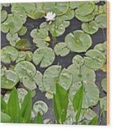 Lotus Pads Wood Print