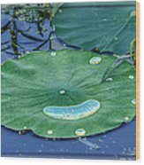 Lotus Picture Of Happiness Wood Print