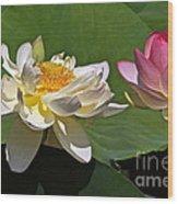 Lotus Pink -- Lotus White And Gold Wood Print