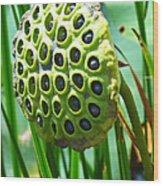 Lotus Pod Wood Print