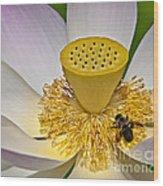 Lotus Pollinator Wood Print