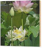 Lotuses in Bloom Wood Print