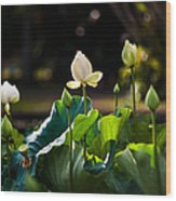 Lotuses In The Evening Light Wood Print