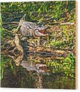 Louisiana Bayou 2 - Paint Wood Print