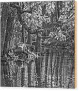 Louisiana Bayou - Bw Wood Print