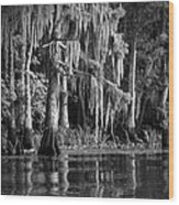 Louisiana Bayou Wood Print