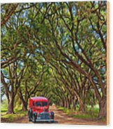 Louisiana Dream Drive  Wood Print
