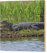 Louisiana Gator Wood Print