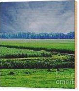 Louisiana Greenway Wood Print
