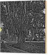 Louisiana Moon Rising Monochrome 2 Wood Print