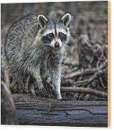 Louisiana Raccoon II Wood Print