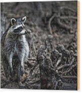 Louisiana Raccoon Wood Print