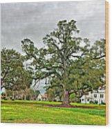 Louisiana Winter 2 Wood Print