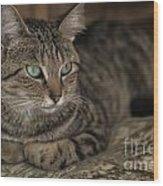 Lounging Cat Wood Print