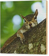 Lounging Squirrel Wood Print