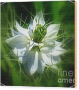 Love In A Mist Wood Print