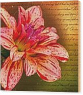 Love Letter To Dahlia Wood Print