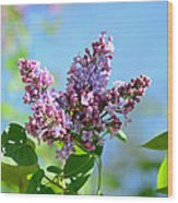 Love My Lilacs Wood Print by Lori Tambakis