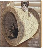 Love Our Cat Condo Wood Print