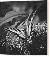 Eclectus Parrot  - Eclectus Roratus Wood Print