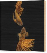 Love Story Of The Golden Fish Wood Print