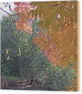 Lovely Autumn Colors Wood Print