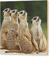 Lovely Group Of Meerkats Wood Print