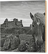 Lovely Horse And Tantallon Castle Wood Print