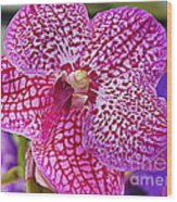 Orchid Lovely In Pink And White Wood Print
