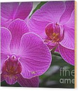 Lovely In Purple - Orchids Wood Print