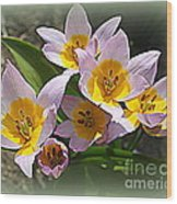 Lovely In White And Yellow - Tulips Wood Print
