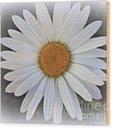Lovely In White - Daisy Wood Print
