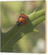 Lovely Lady Bug Wood Print