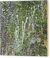 Lovely Lichens Wood Print