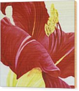 Lovely Lily Floral Print Wood Print