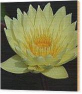 Lovely Lotus Wood Print