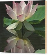 Lovely Lotus Reflection Wood Print