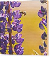 Lovely Lupins And Busy Bee Wood Print