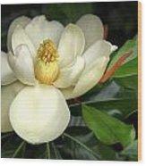 Lovely Magnolia Wood Print