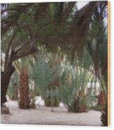 Lovely Oase Desert Camp Sinai Egypt Wood Print