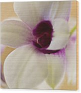 Lovely Orchid Wood Print by Dana Moyer