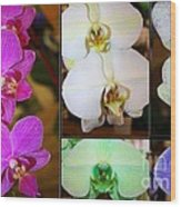 Lovely Orchids - A Collage Wood Print