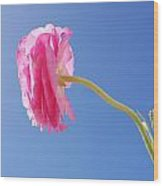 Lovely Pink Flower Series 4 Or 5 Wood Print
