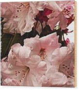 Lovely Pink Rhododendrons With Border Wood Print